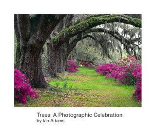 Trees: A Photographic Celebration