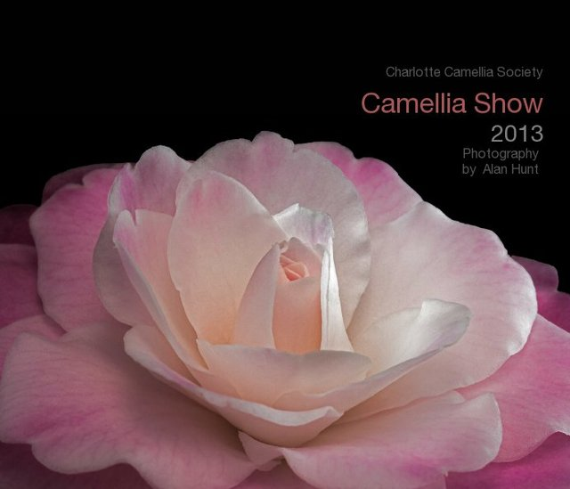 Camellia Show 2013