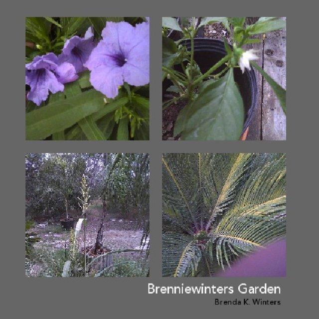 Brenniewinter's Garden