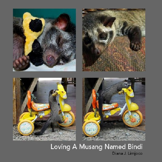 Loving A Musang Named Bindi