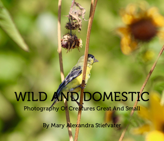 Wild And Domestic book cover