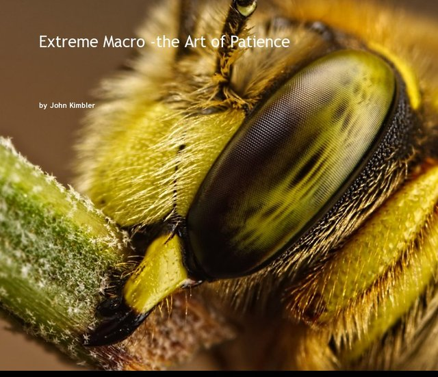 Extreme Macro -the Art of Patience