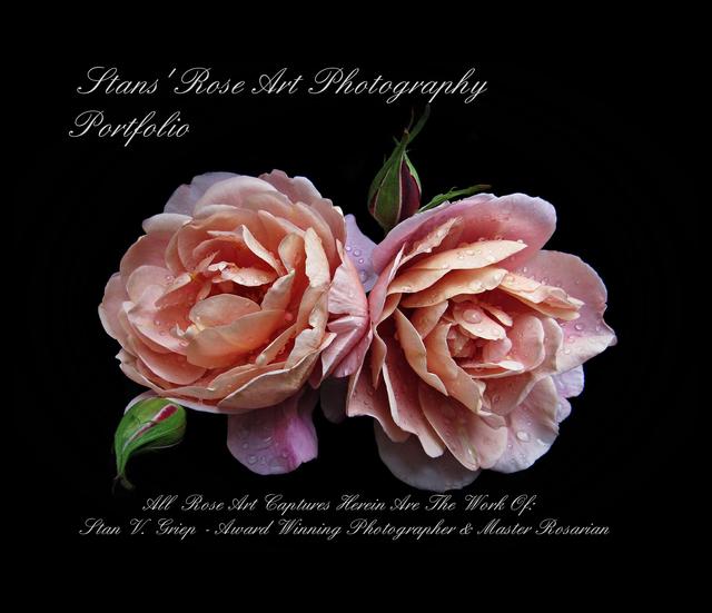 Stans' Rose Art Photography Portfolio