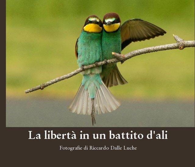 La libertà in un battito d'ali