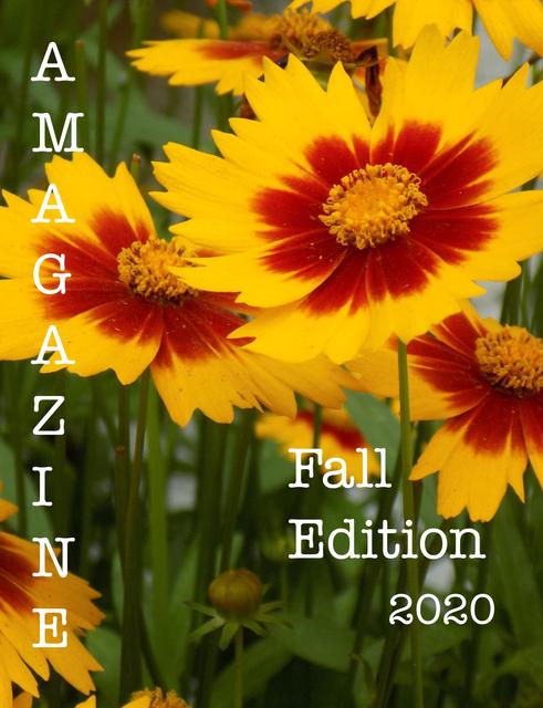 AMagazine Fall Edition 2020