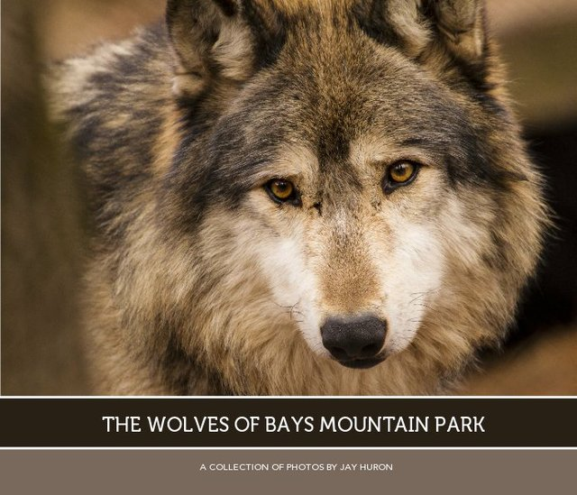 The Wolves of Bays Mountain Park