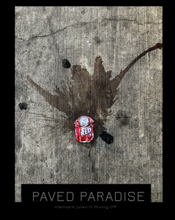 Paved Paradise book cover