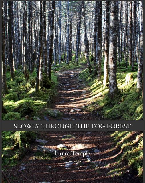Slowly Through the Fog Forest
