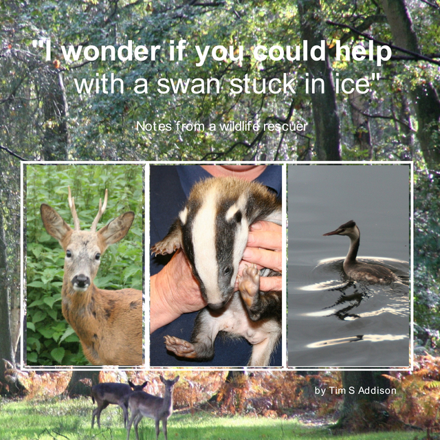 Notes from a wildlife rescuer