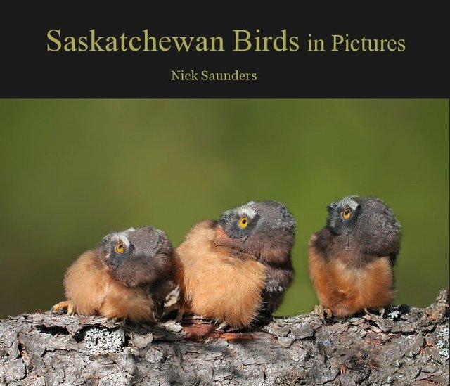 Saskatchewan Birds in Pictures