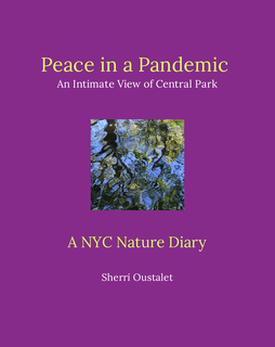 Peace in a Pandemic An Intimate View of Central Park book cover