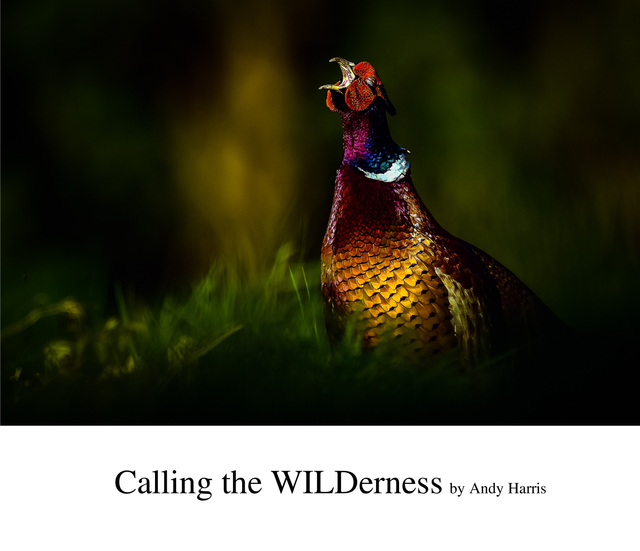 Calling the WILDerness