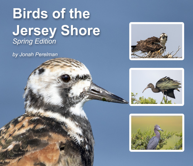 Birds of the Jersey Shore