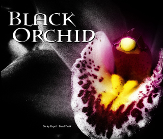 Black Orchid book cover