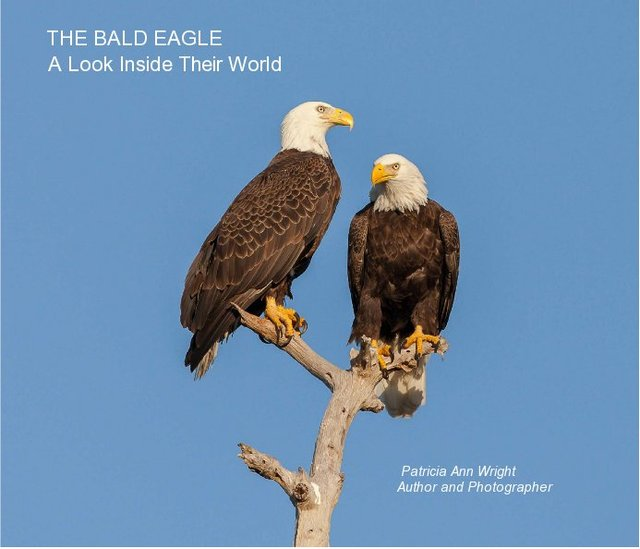 THE BALD EAGLE (Softcover)
