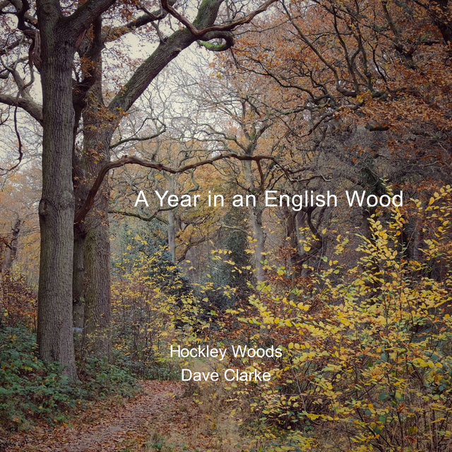 A Year in an English Wood.
