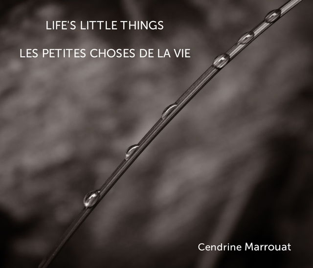 Life's Little Things
