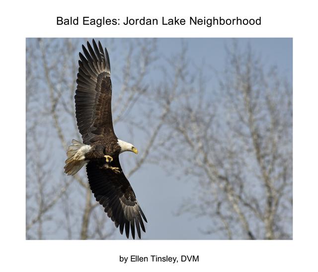 Bald Eagles: Jordan Lake Neighborhood