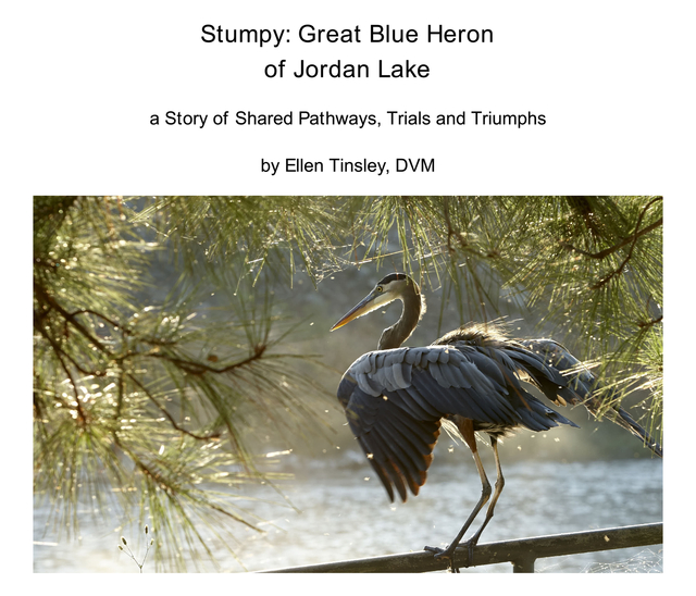 Stumpy: Great Blue Heron of Jordan Lake