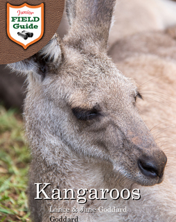 Kangaroos book cover