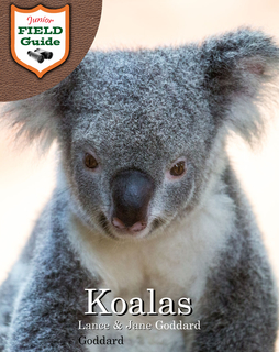 Koalas book cover