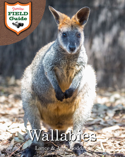 Wallabies book cover