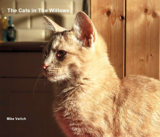 The Cats in The Willows